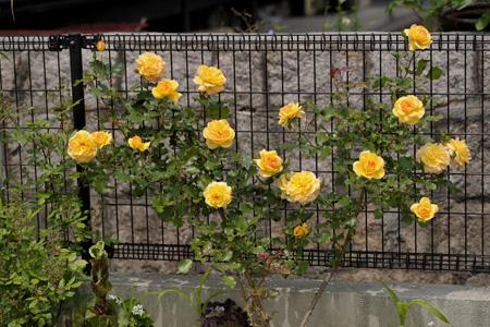 sahara98_2011516-2.jpg