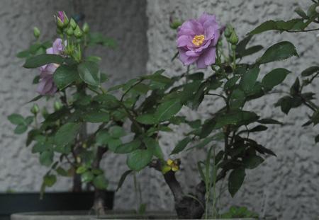 tasogare2011512-2.jpg