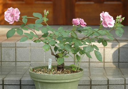 tasogare2011516-1.jpg