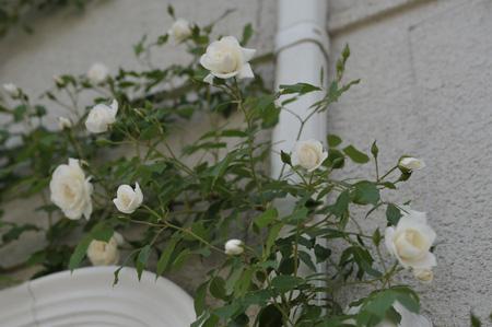 wall2011514-2.jpg