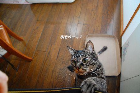 20110420kotetsu.jpg