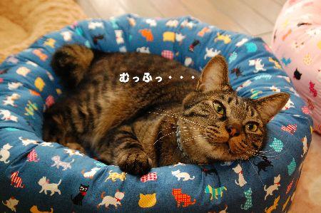 20110506kotetsu2.jpg