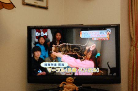 20110506neko.jpg