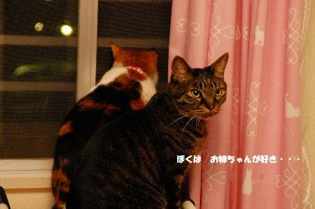 20110508mikankotetsu2.jpg