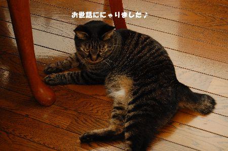 20110619kotetsu.jpg