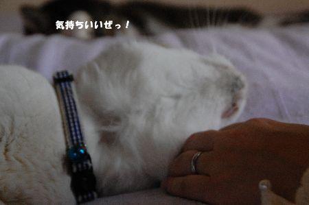 20110620みゃあくん3