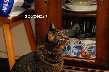 20110715kotetsu.jpg