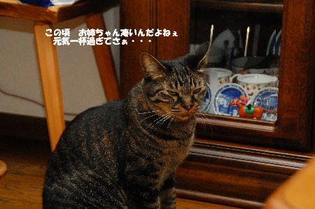 20110715kotetsu2.jpg