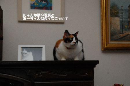 20110715mikan3.jpg
