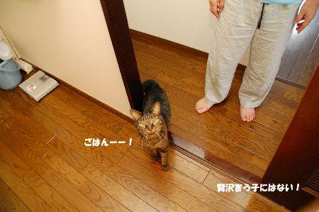 20110724kotetsu.jpg