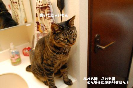 20110724kotetsu5.jpg