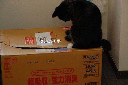 20110815kotetsu2.jpg