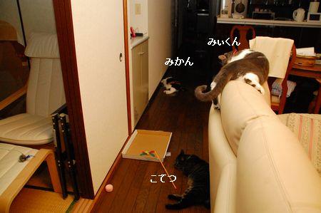 20110815mikankotetsumiikun.jpg