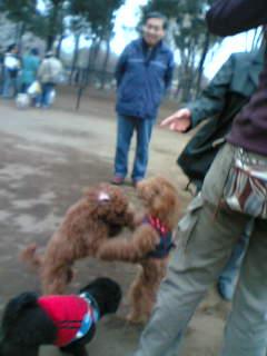 犬相撲大会