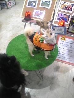 訪問犬のポメちゃんとくまちゃん