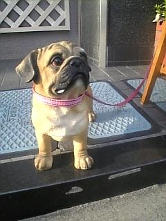 整骨医院の犬