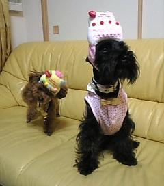 お誕生日犬