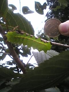 大きい芋虫2