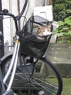 自転車かごに猫
