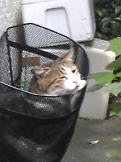 自転車かごに猫2