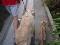 2人並んでの お散歩