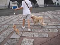 駒沢公園なんだ