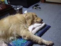 タオルの枕は気持ちいいね