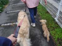 お散歩、お散歩
