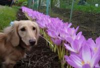 こんなにいっぱいの花 どうするの?
