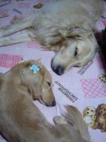 寝るときはいつも 仲良しね