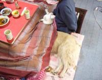 猫は外に居るのに 犬はコタツ・・・・