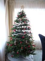 大きいツリーでした