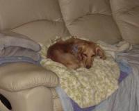 ソファーの上の あったかい所で寝てるよ