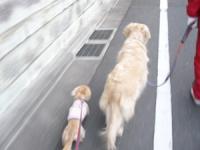 さあ お散歩だ 今日はどこに行くのかな