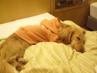 こっちも同じベッドなんだ