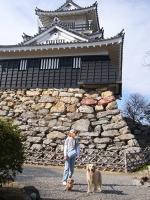野良積みの浜松城です