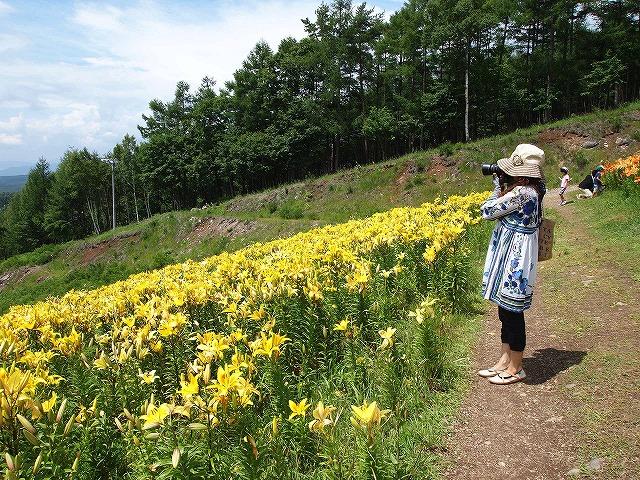 065富士見高原ゆりの里