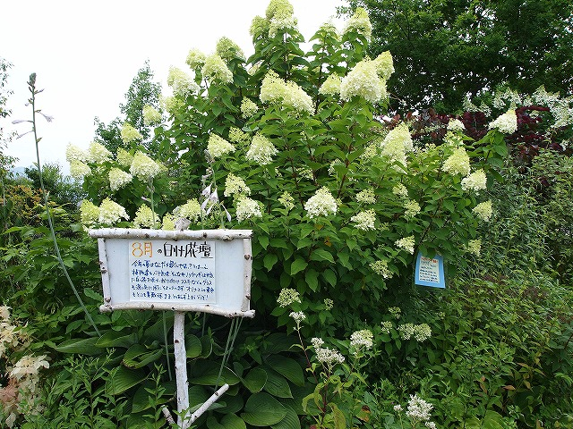 077白州花壇