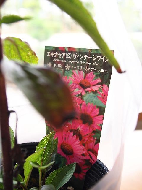 087白州花壇