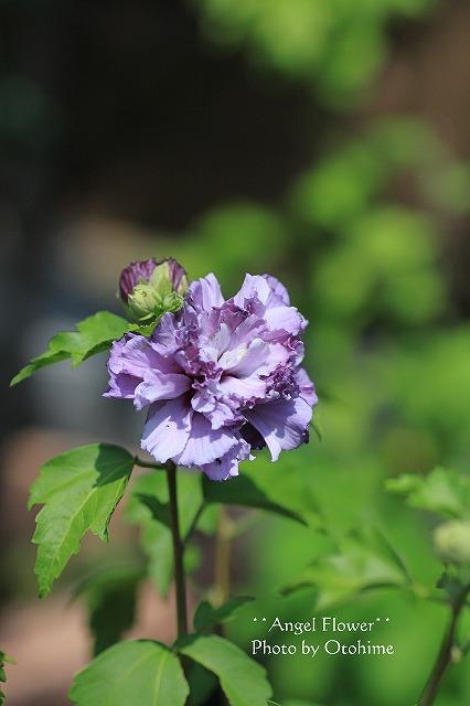 IMG_4295紫玉