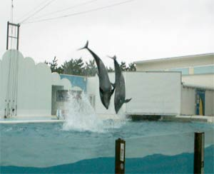 新潟水族館のイルカショー