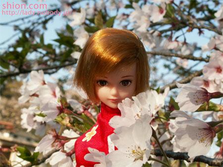 シオン 桜 花