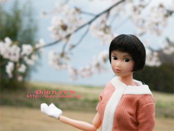 桜 momoko
