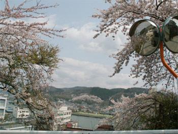 sakurayama01.jpg