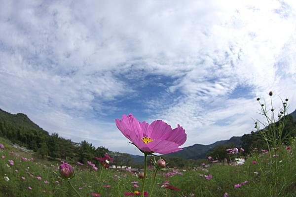 chichibu1_1095.jpg