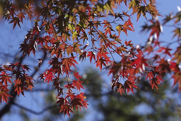 fuyuzakura_2073.jpg