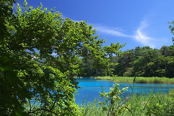 goshiki3_4983.jpg