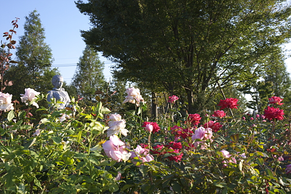 rose_1926.jpg