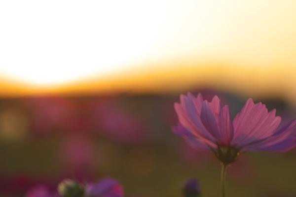 sunset_1845.jpg