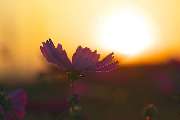 sunset_1846.jpg